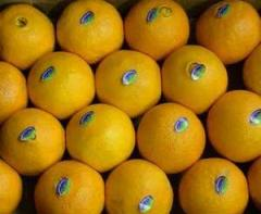 Πορτοκάλια και Γκρέιπ φρουτ