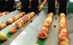 Μεταφορείς για βιομηχανίες τροφίμων