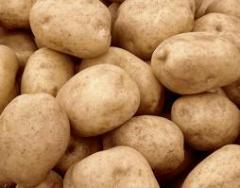 Πατάτες καλής ποιότητας