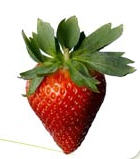 Strawberries for export / Φράουλες για εξαγωγή