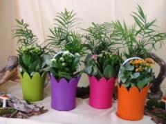 Κεραμικό χρωματιστό με φυτά εσωτερικού χώρου