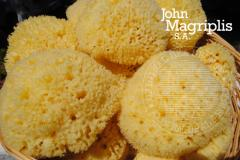Natural Sea Sponge Honeycomb