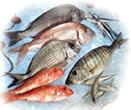Όλα τα είδη φρέσκων αλιευμάτων καλής ποιότητας