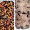 Επιλεγμένα εκλεκτά ψάρια, κεφαλόποδα και