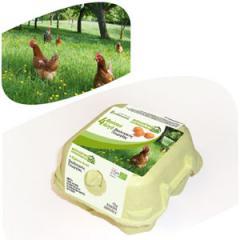 Φρέσκα Αυγά Βιολογικής Γεωργίας 4