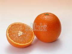 Πορτοκάλια ελληνικά άριστης γεύσης