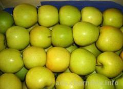 Μήλα γκόλντεν άριστης ποιότητας
