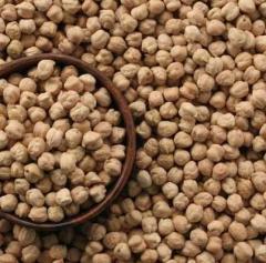 Leguminous crops