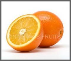 Πορτοκάλια από ελληνικό παραγωγό άριστης ποιότητας