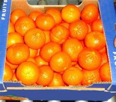 Mandarin ortanique from Greece