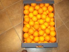Shamouti Oranges (Jaffa oranges), Valencia