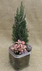 Συνθέσεις φυτών σε γυαλί (12cm)