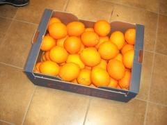 Oranges (Fress Valencia, Salustiana, Naivel,