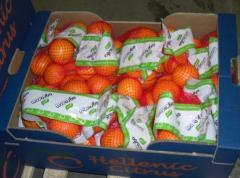 Mantarins  (Organic Nova, Organic Clementines,