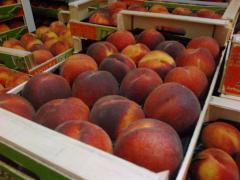Peaches-Ροδάκινα