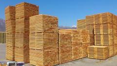 Ξυλείας κυρίως από ξύλο οξιάςΜεγάλες ποσότητες