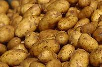 Πατάτες Πολυμύλου Δρεπάνου και Φούφα