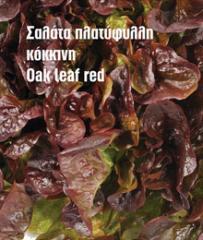 Σαλάτα πλατύφυλλη κόκκινη και πράσινη