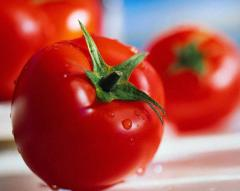 Ντομάτες θερμοκηπίου