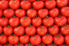 Greek Tomatoes (indoor-greenhouse production) up