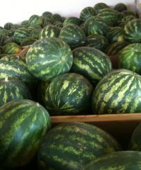 Watermelon Obla-Crisby-Samantha