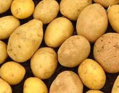 Πατάτες - Κρεμμύδια