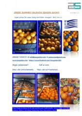 Greek SUMMER Oranges  VALENCIA