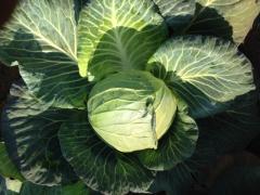 Fruit & Veg F.E. Farming Exporting -