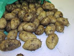 Πατάτες Νευροκοπίου Potatoes