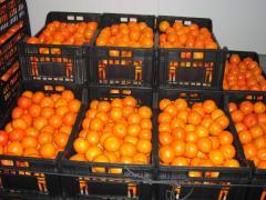 Μανταρίνια Mandarines