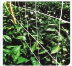 Δίχτυα υποστήριξης για αναρριχητικά φυτά