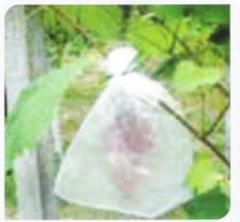 Σακούλα προστασία για σταφύλια Salvafruta