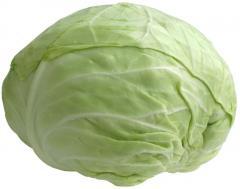 Λάχανα- Cabbages