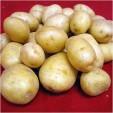 Πατάτες εξαιρετικής ποιότητας