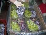 Σταφυλι βιολογικής καλλιεργειάς