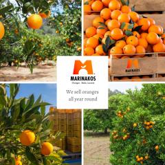Oranges fresh from Skala Laconia Greece