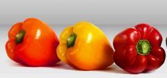 Πιπεριές καλής ποιότητας από ελληνικό παραγωγό