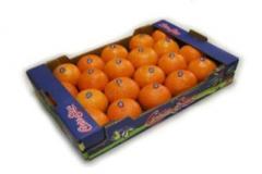 Πορτοκάλια Μέρλιν (Ομφαλοφόρα)