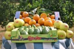 Πορτοκάλια, Αβοκάντο, Γκρέϋ Φρουτ