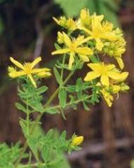 Φαρμακευτικό φυτό Βαλσαμοχορτο