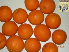 Πορτοκαλια βαλεντσια για εξαγωγη.