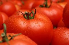 Ντομάτες καλής ποιότητας