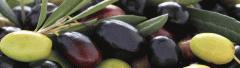 Kalamata Olives, Green Olives