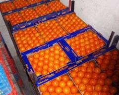 Πορτοκάλια Navel από ελληνικό παραγωγό άριστης