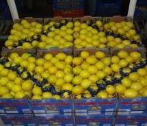 Λεμόνια   από την Ελλαδα καλής ποιότητας