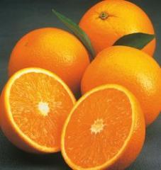 Πορτοκάλια Valencia