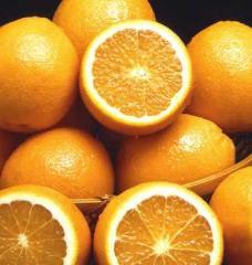 Πορτοκάλια άριστης ποιότητας απο την Ελλαδα