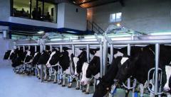 Παράλληλα γρήγορης εξόδου για αγελάδες