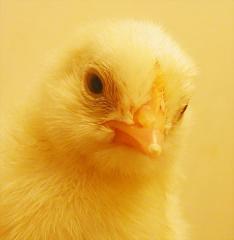 Πτηνοτροφές καλής ποιότητας