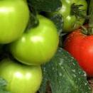 Λαχανικά βιολογικής καλλιέργειας.